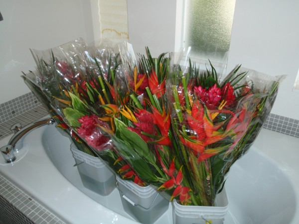 Tropical cut flowers floral arrangement heliconia ginger ti